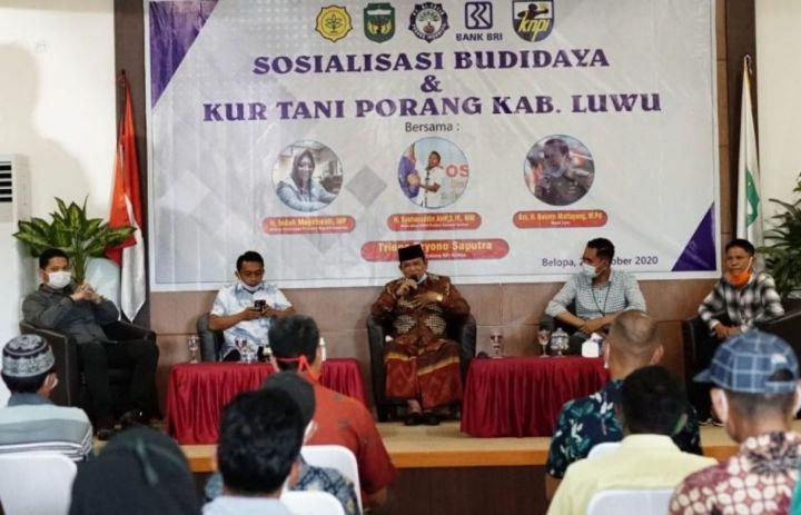 Wakil Ketua DPRD Sulsel Motivasi Petani Luwu Untuk Membudidayakan Tanaman Porang